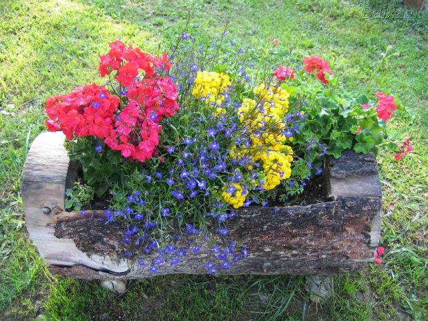 variedades-de-flores-para-jardim-3